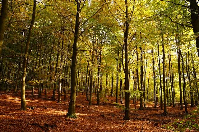 Autumn, Leaves, Indian Summer, Golden Autumn, Nature