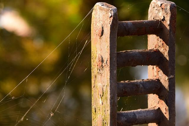 Autumn, Indian Summer, Spider Webs, Nature, Back Light