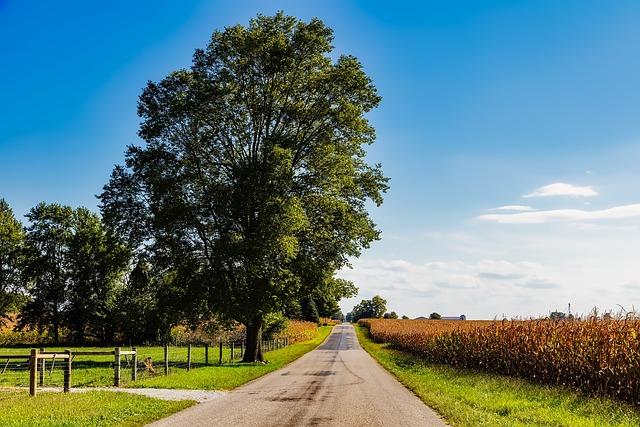 Indiana, Landscape, Cornfield, Corn, Road, Trees, Sky
