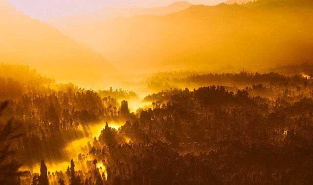 Sunrise, Morning, Sunlight, Indonesia, Forest