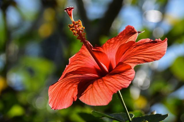 Bali, Indonesia, Travel, Flower, Exotic, Red, Blossom