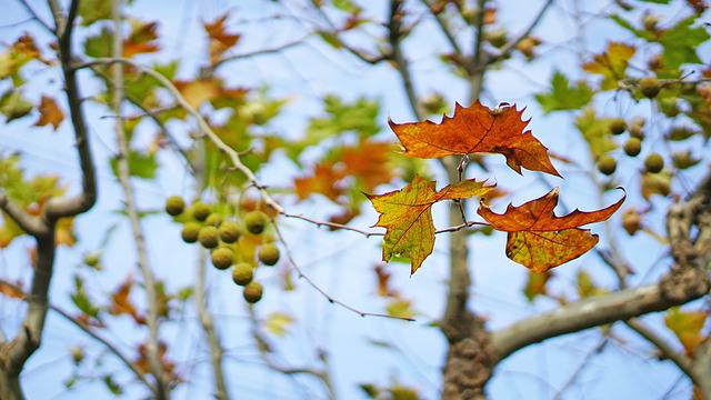 The Leaves, Autumn, Indus, The Depth Of Field