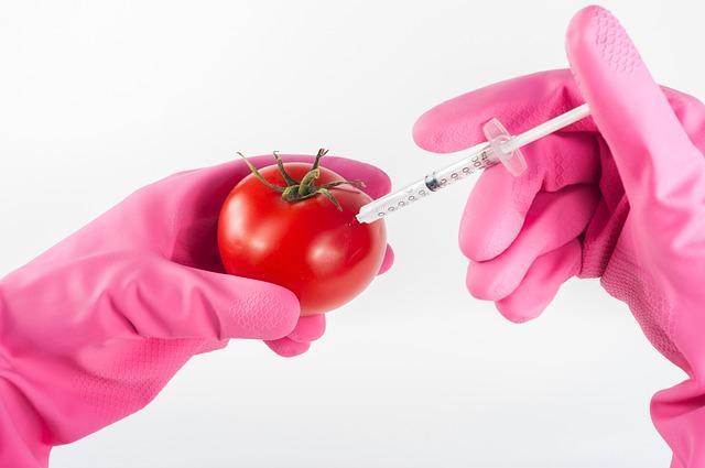 Modified, Tomato, Genetically, Food, Injection, Genetic