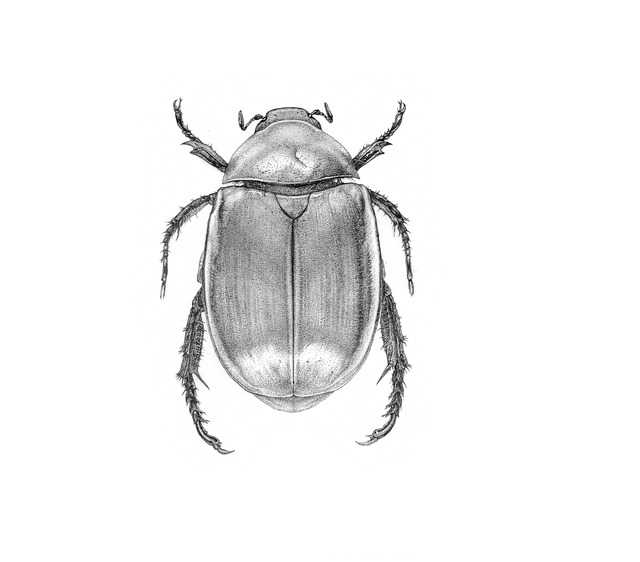 No One, One, Isolated, Invertebrates, The Beetle, Ink