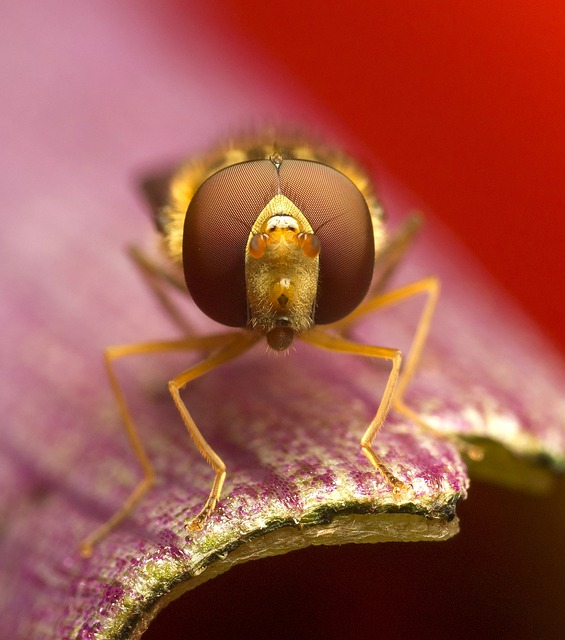 Insect, Invertebrate, Nature, Animal, Flower