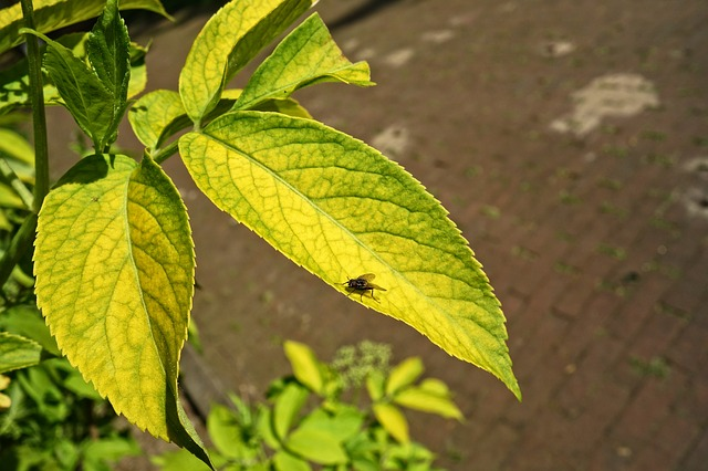 Fly, Insect, Animal, Plant, Leaf, Vein, Pattern, Garden