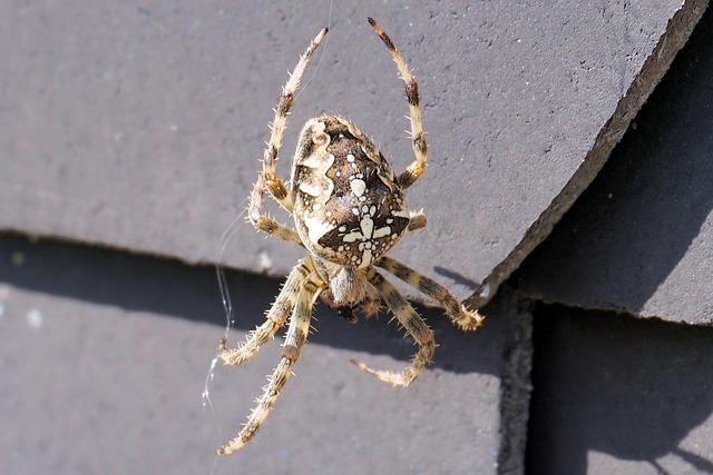 Spider, Web, Insect, Nature, Cobweb, Close Up, Animal