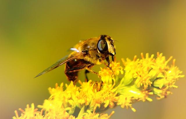 Apostate Resistant, Insect, Muchówki, Flower, Animals
