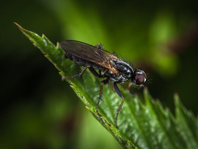 Insect, Nature, Living Nature, Animals, Fly, Macro