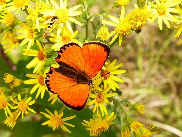 Nature, Flower, Plant, Summer, Garden, Animals, Insect