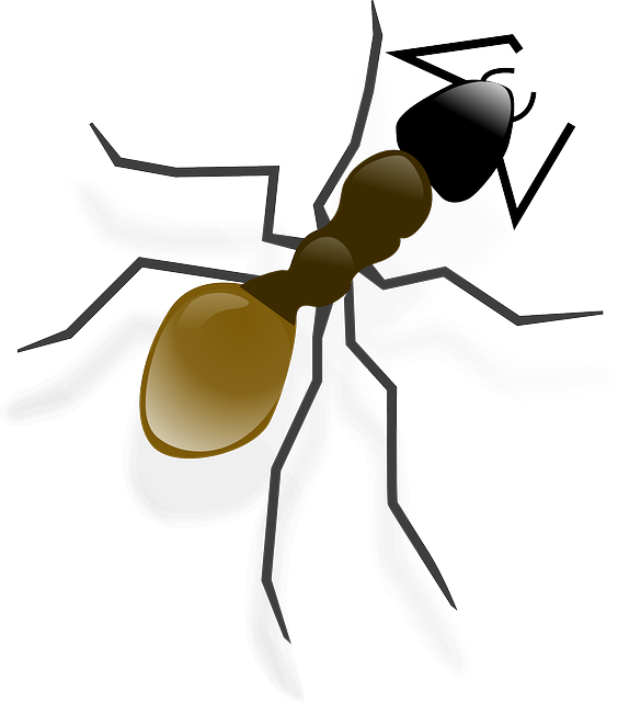 Ant, Insect, Animal, Wildlife