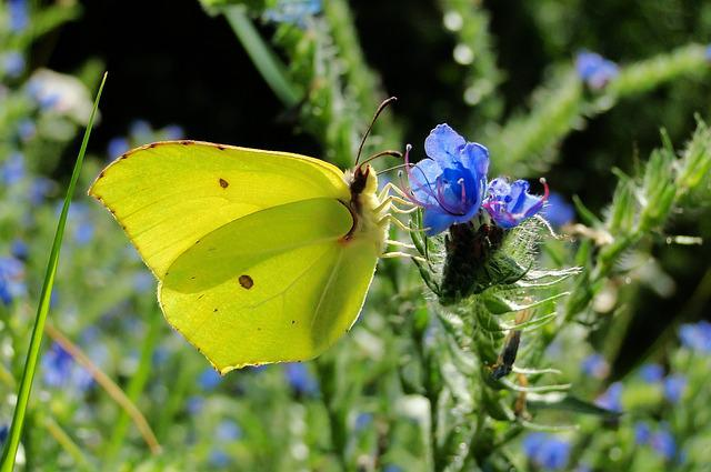 Nature, Butterfly Day, Insect, At The Court Of, Flower