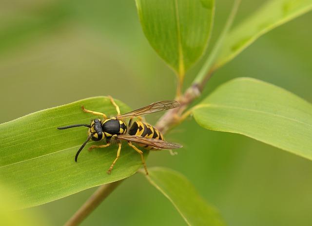Wasp, Insect, Macro, Close, Nature, Bamboo