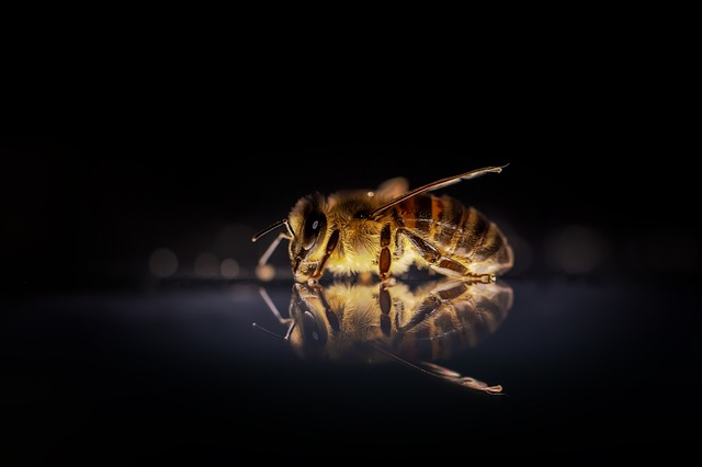 Honey Bee, Bee, Bees, Insect, Nature, Macro, Animal