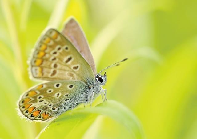 Butterflies, Insect, Bezkręgowiec, Macro, Nature
