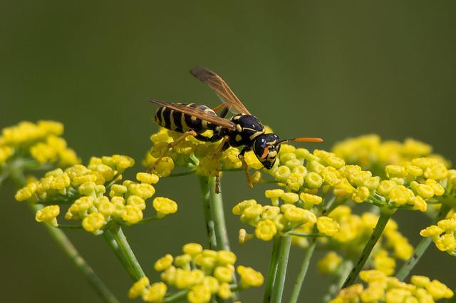 Nature, Wasp, Insect, Plant, Flower, Blossom, Bloom