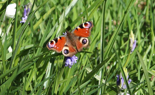 Butterfly, Grass, Bluebells, Flowers, Nature, Insect