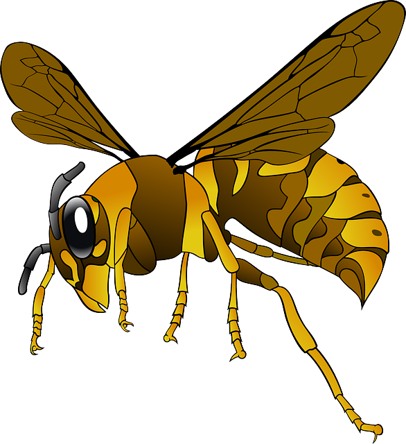 Hornet, Wasp, Insect, Bee, Brown, Yellow, Wings