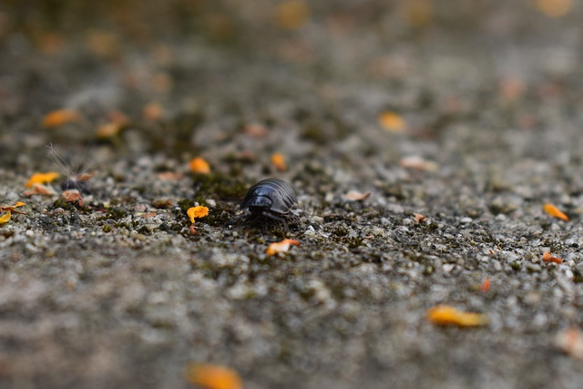 Insect, Woodlouse, Close, Bug