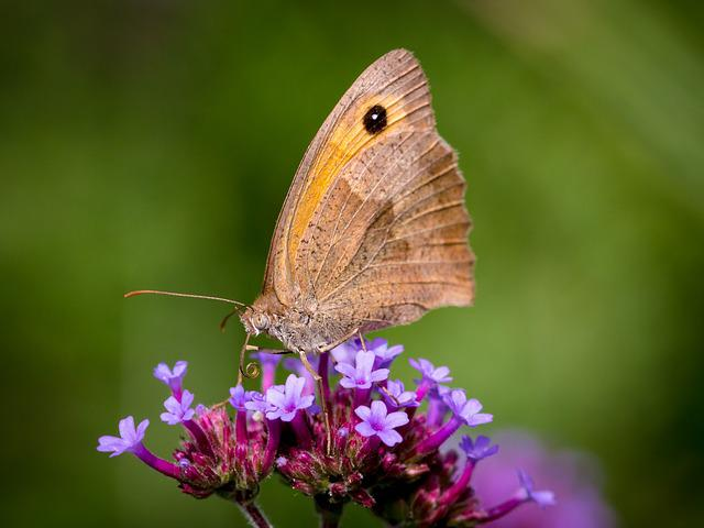 Butterfly, Insect, Close, Flower