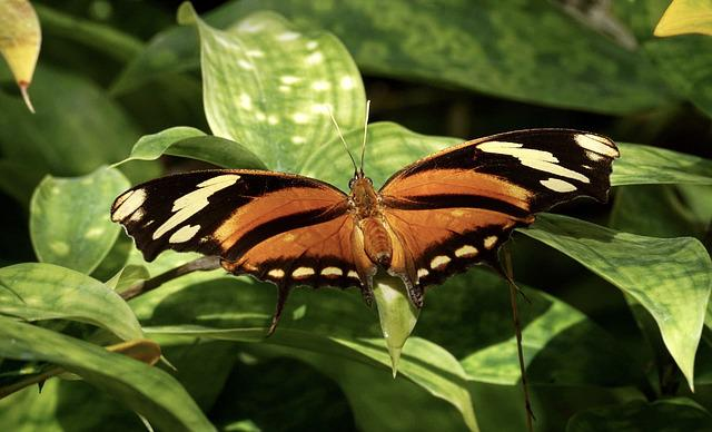Butterfly, Exotic, Insect, Butterfly House