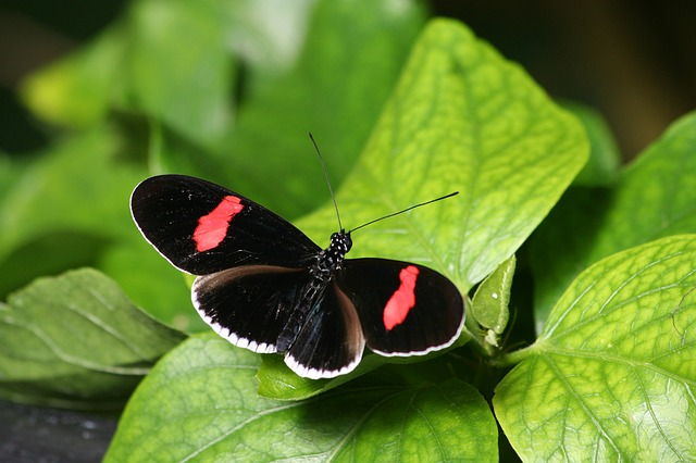 Butterfly, Insect, Nature, Outdoors, Invertebrate