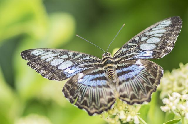 Butterfly, Nature, Insect, Wing, Animal, Close