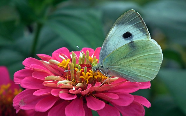 Butterfly, Insect, Nature, Macro, Flower, Summer