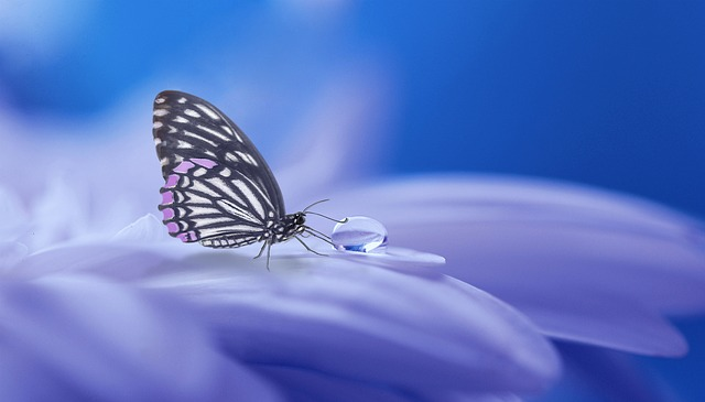Butterfly, Nature, Insect, Wing, Summer, Background