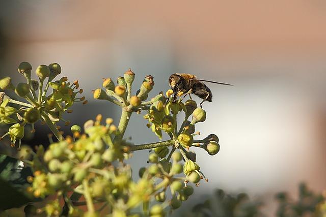 Wasp, Insect, Close, Nature, Animal, Field Wasp, Ivy