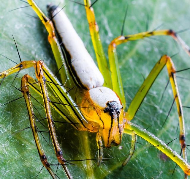 Spider, Arachnid, Insect, Close