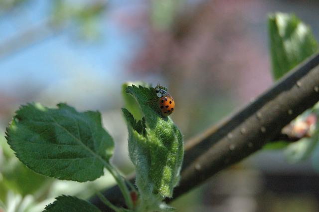 Leaf, Nature, Plant, Close, Insect, Tree, Small, Garden