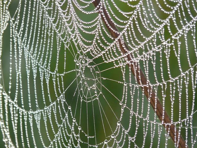 Cobweb, Morgentau, Dew, Dewdrop, Drip, Spider, Insect
