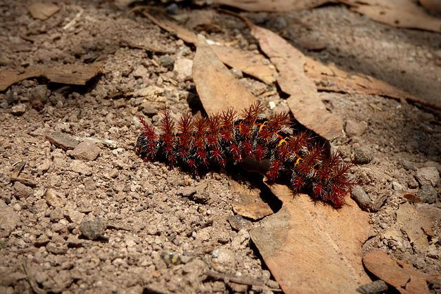 Cocoon, Caterpillar, Insect, Macro, Earth, Larva