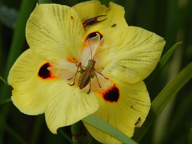 Insect, Invertebrate, Cricket, Nature, Animal, Antennas