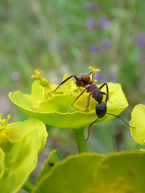 Ant, Flower, Detail, Insect