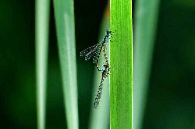 Insect, Nature, Leaf, Animal World, Dragonfly, Grass