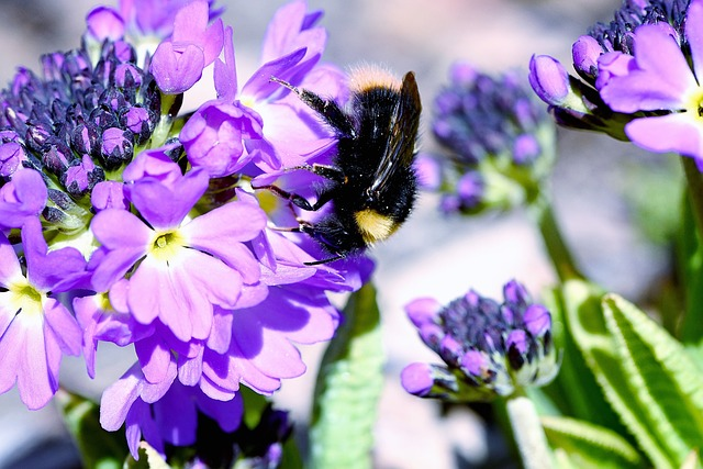 Hummel, Insect, Flower, Purple, Drumstick, Garden
