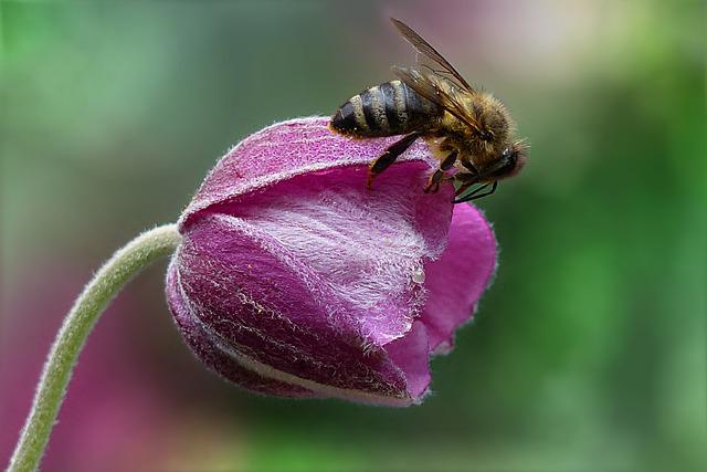 Bee, Honey Bee, Apis, Insect, Flower, Garden