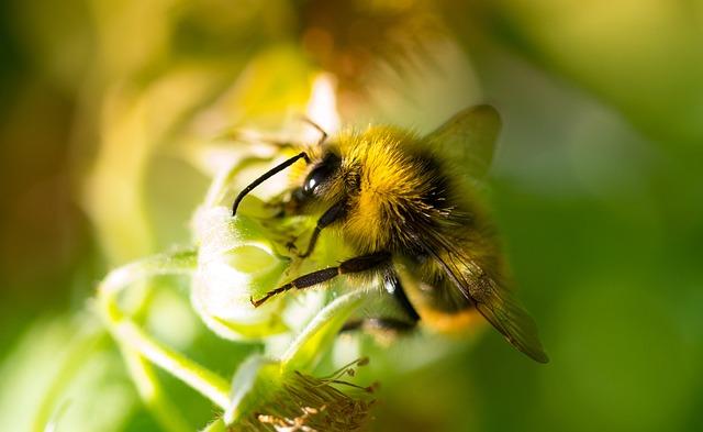 Bumblebee, Garden, Macro, Nature, Flower, Insect