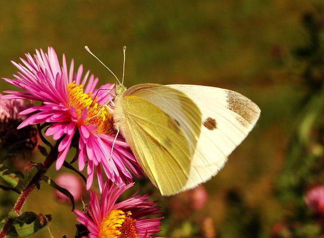 Nature, Butterfly Day, Insect, Flower, Plant, Animals
