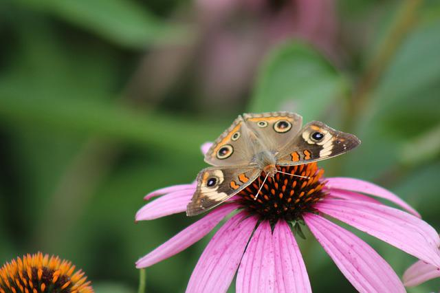 Nature, Insect, Outdoors, Butterfly, Flower, Closeup