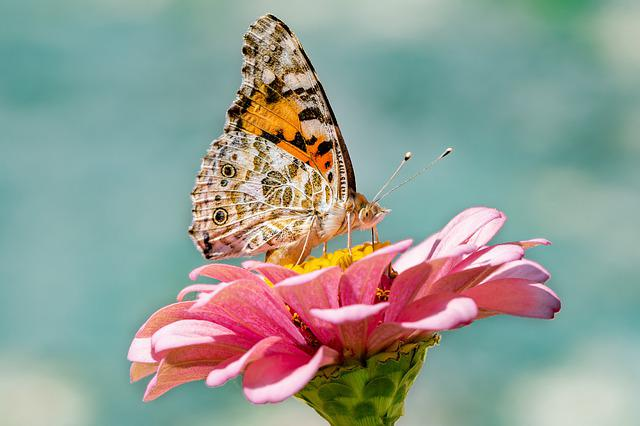Butterfly, Nature, Insect, Flower, Summer, Blossom