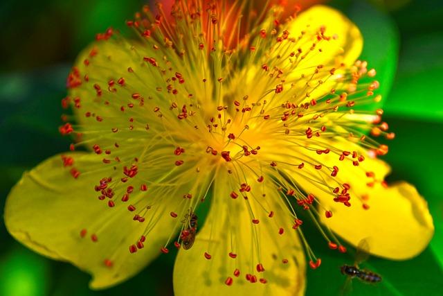 Flower, St John's Wort, Petals, Yellow, Stamen, Insect