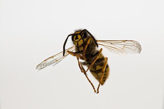 Insect, Fly, Wing, Bee, Nature, Wasp, Close