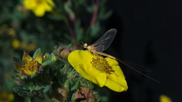 Flash In The Pan, Insect, Fly, Five Finger Herb