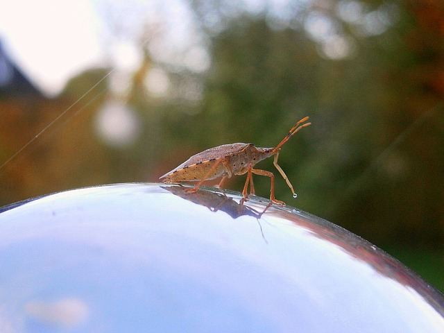 Insect, Bug, Arma Custos, Forest Guardian
