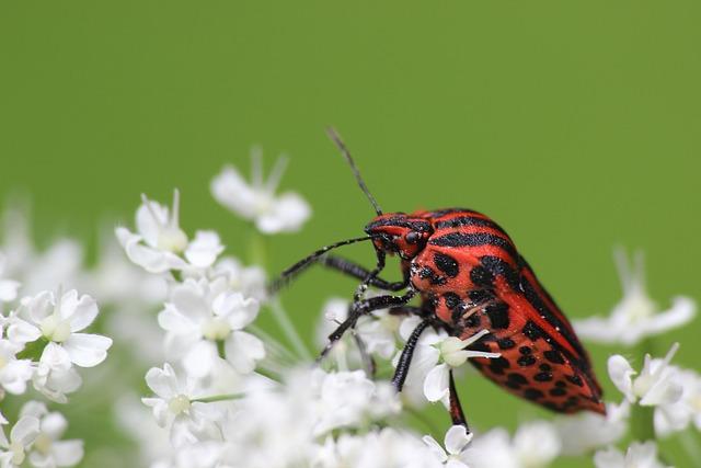 Bug, Strip Bug, Insect, Forest, Mottled Strip Bug