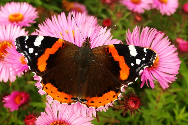 Nature, Butterfly Day, Flower, Insect, Garden, Animals
