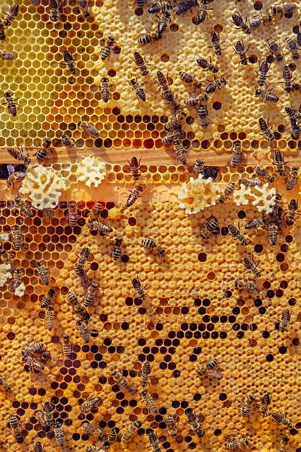 Bees, Nature, Animals, Honeycomb, Honey Bee, Insect